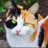 Kedi işte :)
