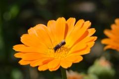 çiçek ve böcek.JPG