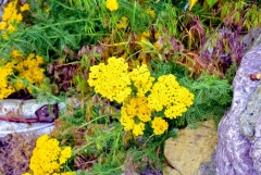 Ubaharın renklerinden saeı