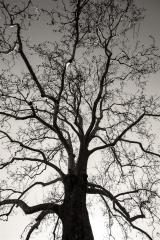 tree (866 x 1299).jpg