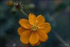 İsimsiz çiçek
