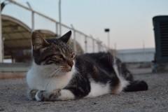 Uzaklara dalan kedi