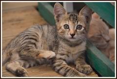 Poz Veren Kedi
